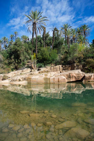 Transparent water in foreground. Palms and beautiful blue sky in background. Paradise Valley in Morocco Фото со стока