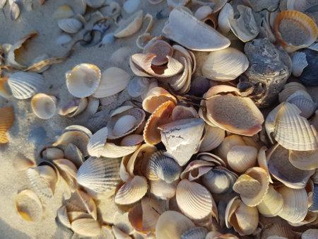 Seashells on the beach close up. Shells are slightly illuminated by side light.