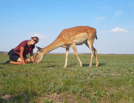 Deer came very close to the girl and she is happy. Askania-Nova - safari. Stock Photo - 162058437