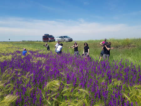 Askania-Nova, Kherson Oblast, Ukraine - 07.06.2020 :Travelers in cars saw a purple field, stopped and took pictures. Blooming wild delphinium.