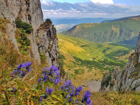 View of Carpathian mountains from Spitsi top. Blue flowers (gentian) in foreground. Season: Summer - Autumn.
