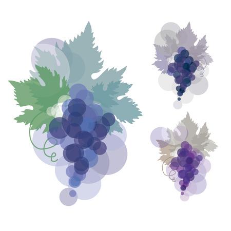 illustration of black wine grape. blue violet natural color grape