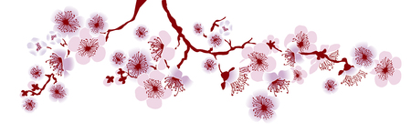 A vector illustration of decorative sakura branch. floral pattern for header, surfers design, decor, cards.