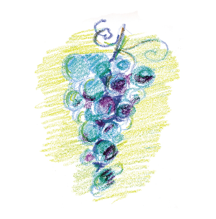 Bunch of wine grape concept color pencil image. Sketch style hand drawn image. Raster illustration.