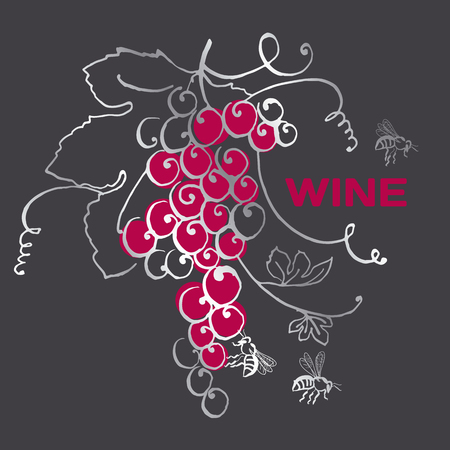 vino: grape bunch for wine label. vector hand drawn illustration