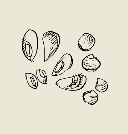 mussel, and shell icon.  food hand drawn sketch vector illustration. Иллюстрация