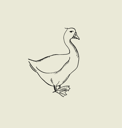 A one goose  image. food hand drawn sketch vector illustration.