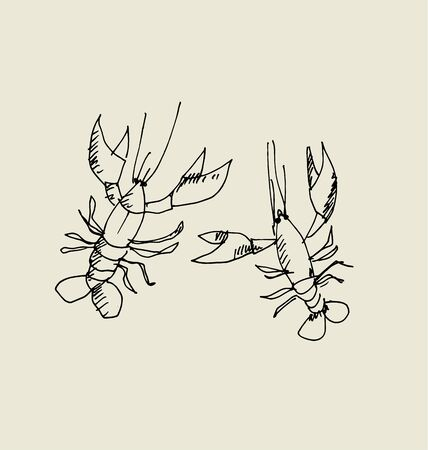 isolated lobster image. food hand drawn sketch vector illustration.