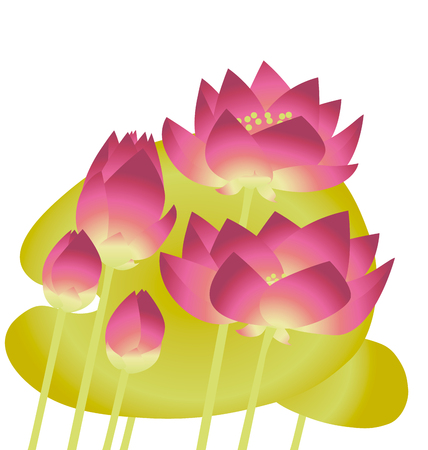 pink lotus lilies with leaves. floral vector illustration element