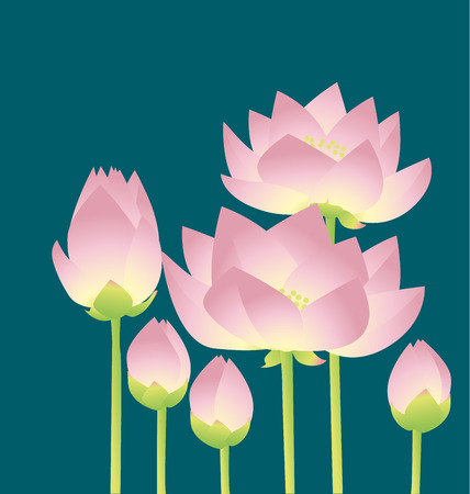 pale rosy lotus lilies decorative floral element. vector illustration