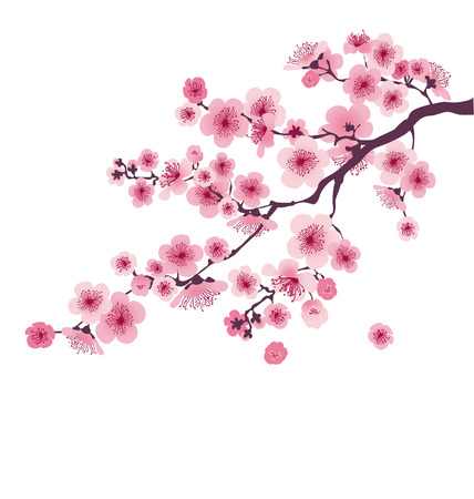 pastel color cherry blossom. vector illustration.  japan sakura branch with blooming flowers Иллюстрация