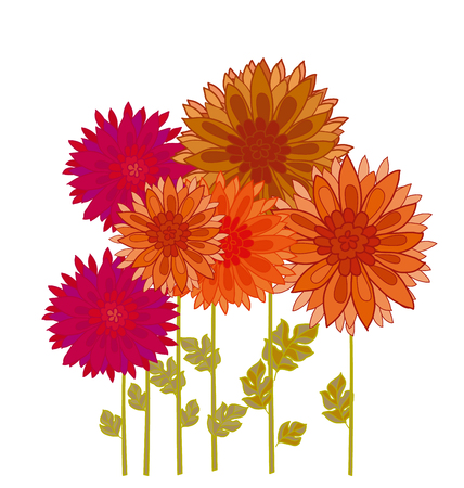 aster: chrysanthemum flower element. autumn aster floral decorative vector illustration. fall decorative blossom