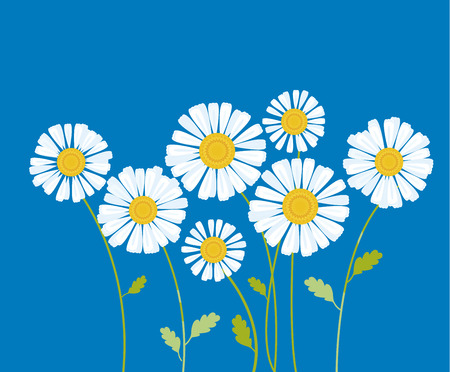 chamomile vector illustration. white daisy flower in decorative abstract style. floral element for header, poster, web Illustration
