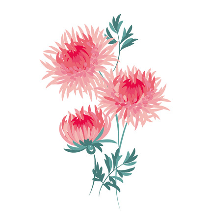 autumn chrysanthemum flower. golden-daisy floral vector illustration. decorative elegant brightly colored ornamental aster fall blossom. 일러스트