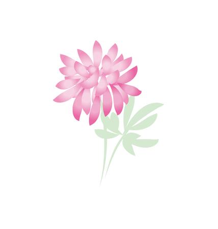 aster: autumn chrysanthemum flower. golden-daisy floral vector illustration. decorative elegant brightly colored ornamental fall aster blossom. Illustration