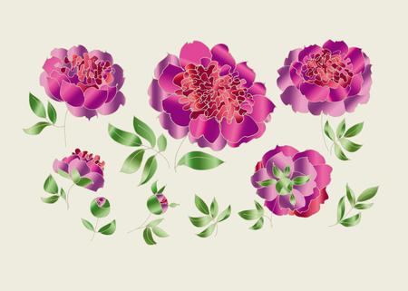 peony sketch vector illustration. hand drawn spring flower sketch for surface design. luxury floral elements set for web and print Illustration