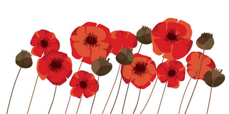 Red poppy flowers and heads vector element for card, header, invitation, poster, social media, post publication. Bold vivid decorative flowers.