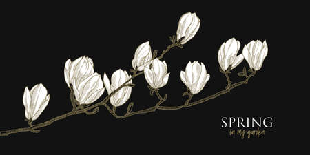 Elegant white magnolia flowers hand drawn element for greeting cards, header, invitation, poster, social media. Gold and black chick night style vector graphics.