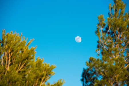 Half moon appear in the afternoon time in the sky with branch of tree at the foreground, Tarragona, Catalunya, Spain. Space for text. Copy space Stock Photo
