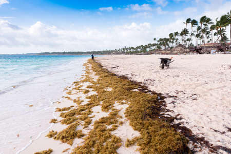 cana: View of the sandy beach in Punta Cana, La Altagracia, Dominican Republic. Copy space for text Stock Photo