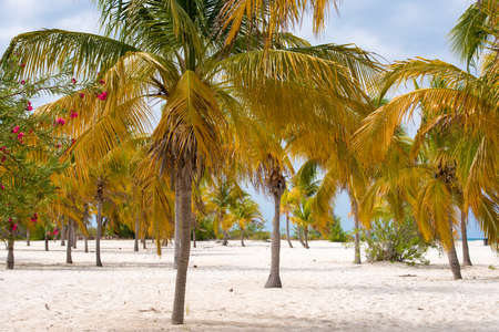 palma: White sand and palm trees on the beach Playa Sirena, Cayo Largo, Cuba