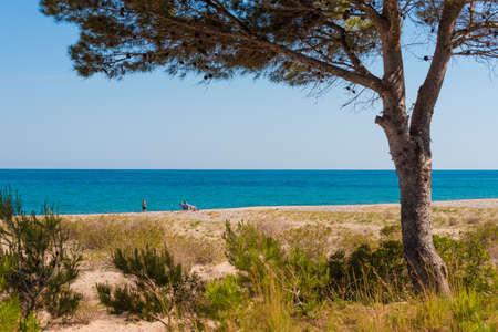 catalunya: MIAMI PLATJA, SPAIN - APRIL 24, 2017: Beach landscape of a pine at the sea. Copy space for text Stock Photo