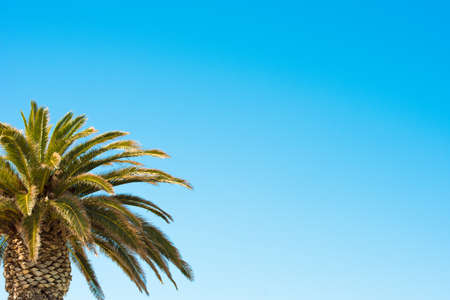 Palm tree on blue sky background. Copy space for text