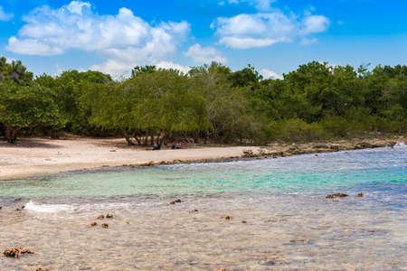 ラ チェック、ドミニカ共和国、ラ ・ ロマナの岩のビーチ。コピーのテキストのための領域
