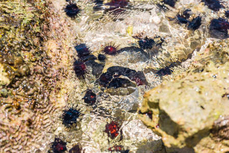 Sea urchins on the ocean floor. Close-up