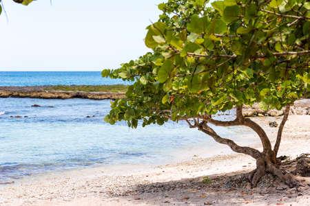 バヤイベ、ドミニカ共和国、ラ チェック砂のビーチ。コピーのテキストのための領域