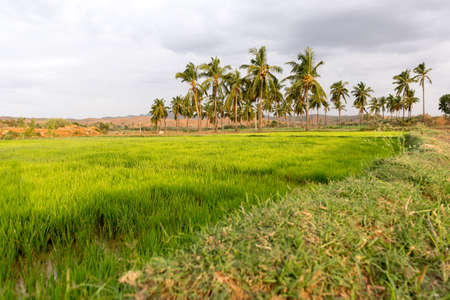View of the Indian rural landscape, Puttaparthi, Andhra Pradesh, India. Copy space for text