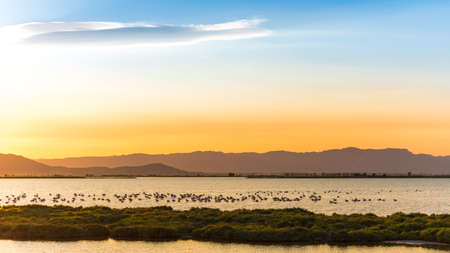 ebro: Sunset at the mouth of the Ebro Delta and wetlands, Tarragona, Catalonia, Spain.