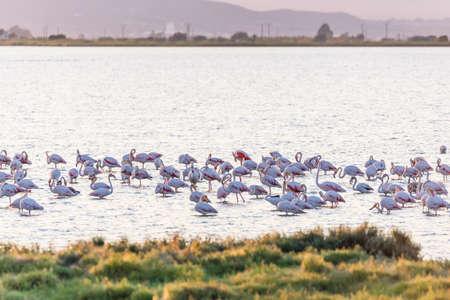 Flamingos in Ebro Delta nature park, Tarragona, Catalunya, Spain. Copy space for text Imagens