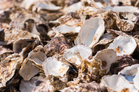 Oyster shells close-up, Leucate, France. Close-up Stock Photo