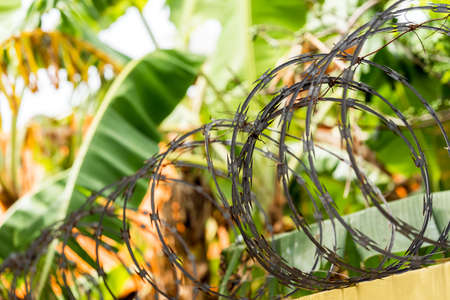 View of the barbed wire in Punta Cana, La Altagracia, Dominican Republic. Close-up