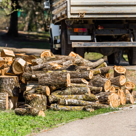 Heap of wooden logs in a city park in Goryachy Klyuch, Russia.