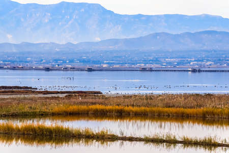 View of the landscape of the river Delta del Ebro, Catalunya, Spain. Copy space for text