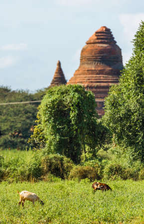 View of the complex of ancient pagodas in Bagan, Myanmar. Copy space for text. Vertical