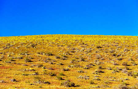 View of the lawn against the blue sky, Patagonia, Chile. Copy space for text