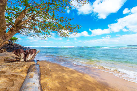 View of the sandy beach, Kauai, Hawaii, USA. Copy space for text