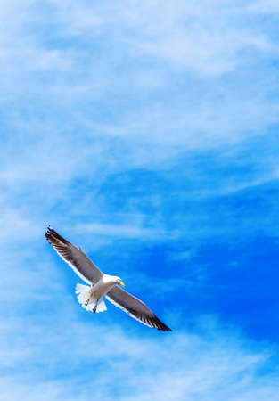 Seagull against the sky, Puerto Montt, Chile. With selective focus. Vertical