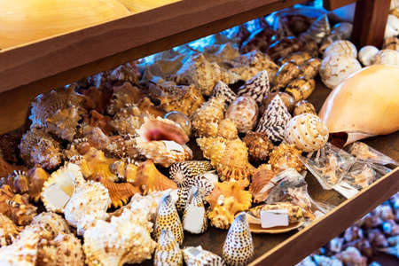 A variety of seashells sold on the local market, Rarotonga, Aitutaki, Cook Islands. Close-up