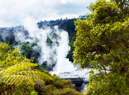 Pohutu Geyser, Te Puia, Rotorua, New Zealand