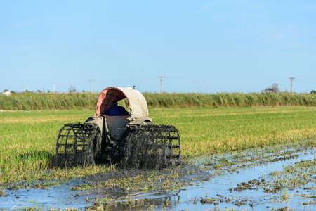 Tractor in the rice field in Ebro Delta with birds 版權商用圖片