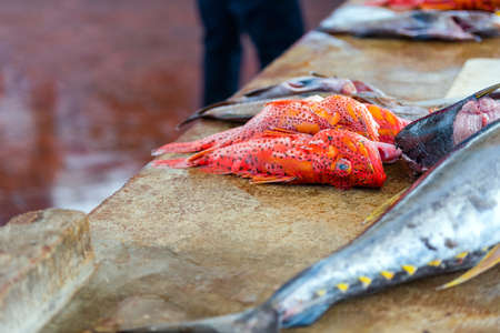 Fresh fish for sale at the Puerto Ayora Fish Market, Santa Cruz Island-Port Ayora, Galapagos Island. With selective focus