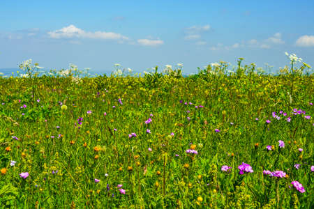 Beautiful Meadow flowering Mountain Summer Landscape at Elbrus Green Slopes of the Northern Elbrus Caucasus Region. Blue sky with white clouds.