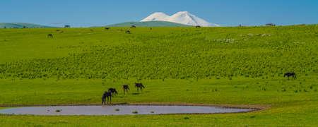 Herd of Horses in Caucasus Mountain at Sunny Day. Elbrus Region North Caucasus, Russia