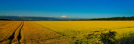 Elbrus Landscape with a Wheat Field at Erly Morning, Panorama