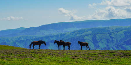 Horses at the Elbrus on a Sunny Summer Day. North Caucasus, Russia