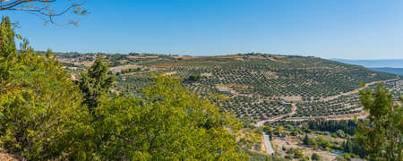 View of olive groves and countryside, Ubeda, Jaen Province, Andalucia, Spain, Western Europe.